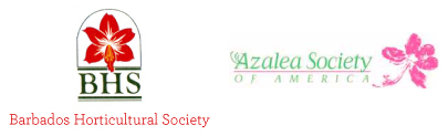 Azalea Society of America