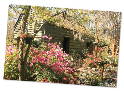 Gilliard Garden Center Magnolia Plantation