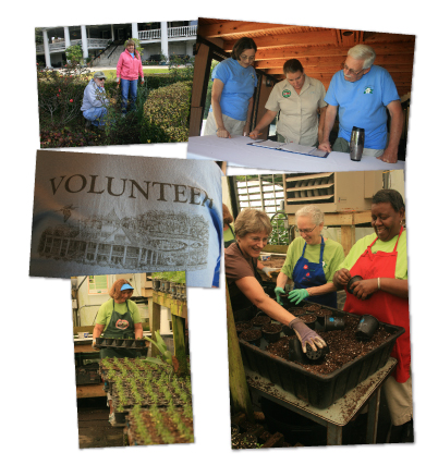 Volunteer at Magnolia Plantation