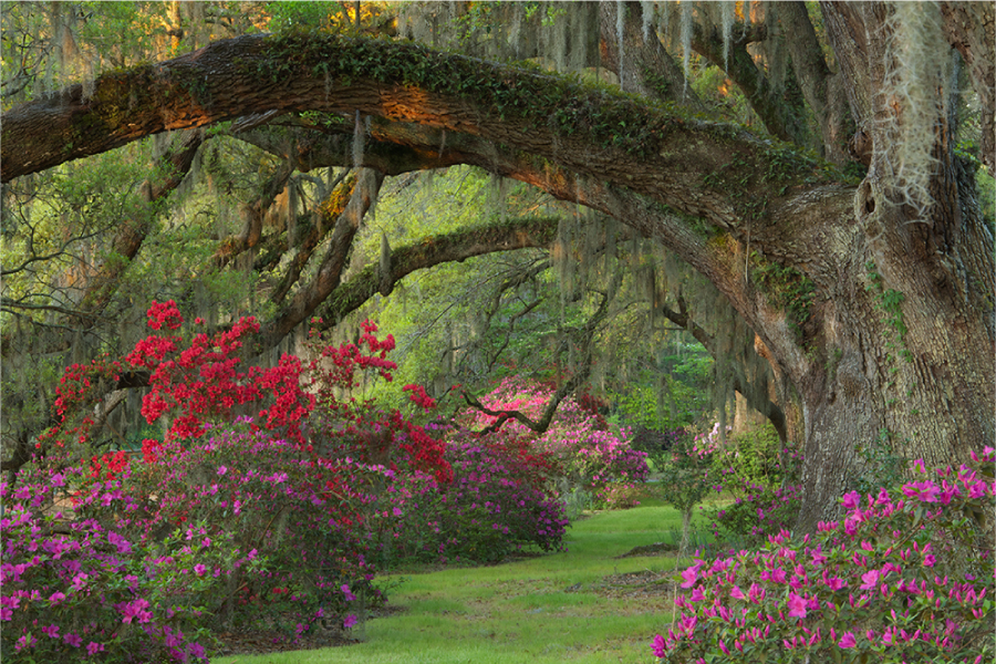 Images Gardens romantic-style gardens at magnolia plantation and gardens