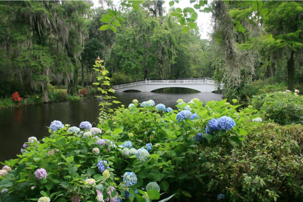 What's Blooming In April At Magnolia Plantation And